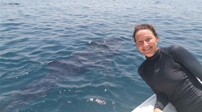 'What a privilege': Swimming with endangered whale sharks in Qatar