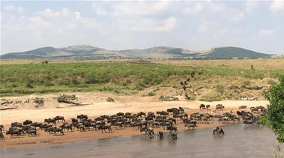 Kenya: As wildebeest migrate, COVID-19 keeps tourists at bay