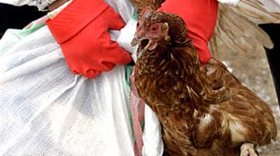 Turkey confirms return of bird flu
