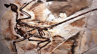 Experts reassess 'biplane' dinosaur