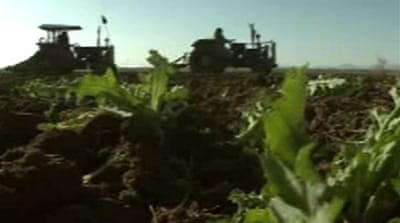 Afghan poppy war alienates farmers