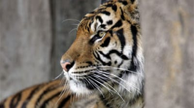 UN group rules to stop tiger trade