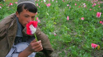 Afghan opium crop 'at record high'