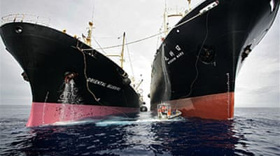 Japan resumes Antarctica whale hunt