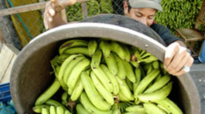 EU loses banana battle at WTO