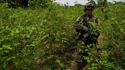 Colombia chemical spraying furor continues