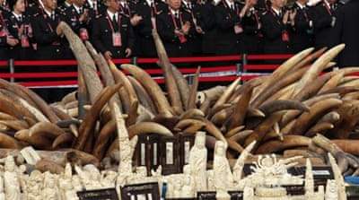 Chinese officials said the destroyed ivory was just a portion of their stockpile [AP]