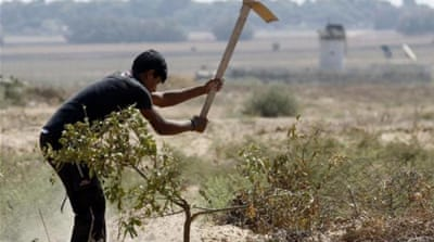 Gaza farmers struggle in war aftermath