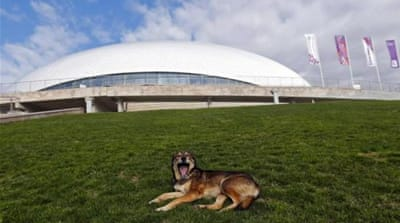 Activists fight to save Sochi's stray dogs