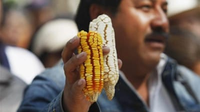High risks, few rewards for Mexico with Monsanto's maize