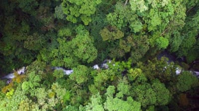 Costa Rica's reforestation efforts promising