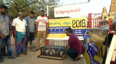 Pigeon racing takes flight in Sri Lanka