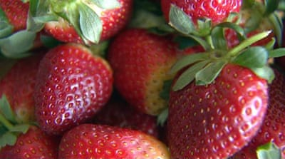 Australia cracks down after needles found in strawberries