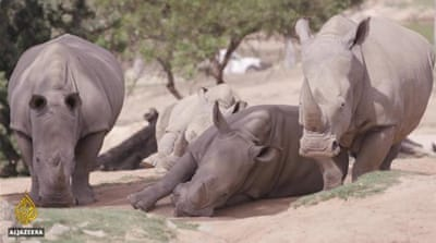 Planet SOS: New technology can save rare Rhino
