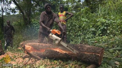 Sierra Leone resumes timber exports, worrying environmentalists