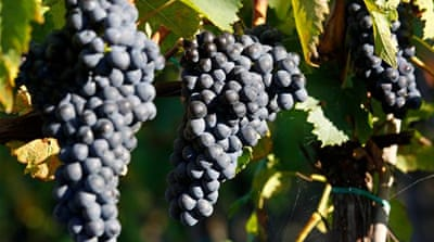 What climate change means for the British wine industry