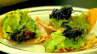 Mexico Cuisine: Edible insects growing in popularity