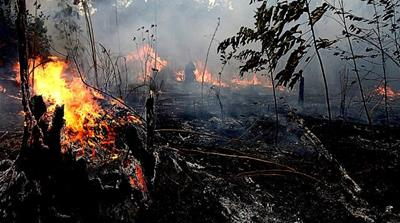 Amazon fires: Rainforest destruction at record high
