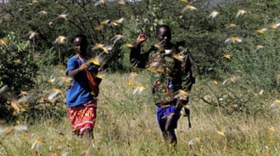 Locust swarms threaten East Africa's crops