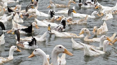 Bird flu a 'fact of life' in Vietnam