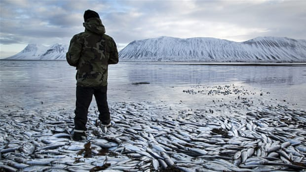 Iceland: Fish fight spawned over Ukraine sanctions