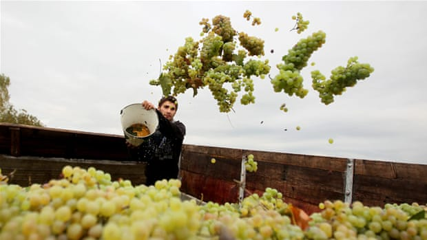 Wine: Georgia's most popular export thrives in embargo