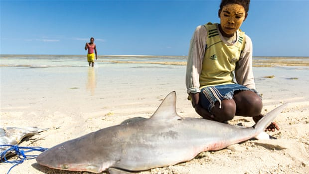 The endangered lifeline of Madagascar's sharks