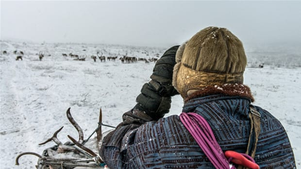 Climate change: Arctic reindeer herders on thin ice