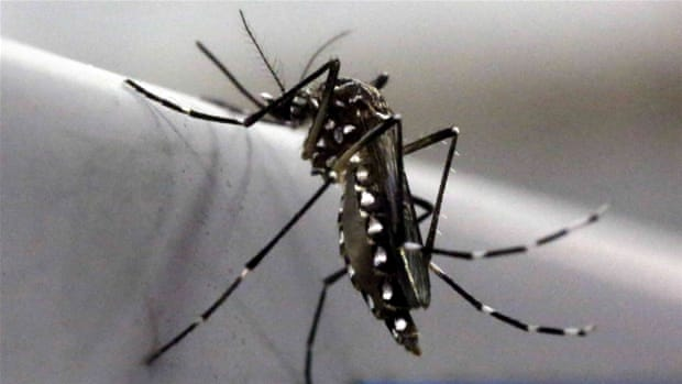 Can genetically modified mosquitoes eradicate malaria?