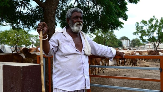 India's Dalit cattle skinners share stories of abuse