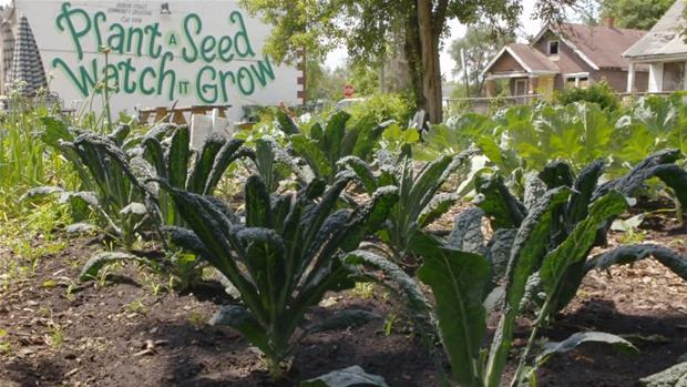 Motown to Growtown: Detroit's Urban Farming Revolution