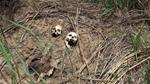 The UN has now documented 40 mass grave sites in Kasai [File: Aaron Ross/Reuters]