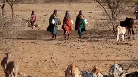 Why are Kenyans starving in food-secure Kenya?   Kenya   Al