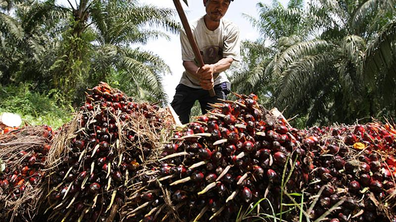 The price of palm oil
