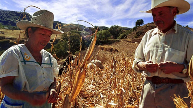 Commodity market maize mexico and usa
