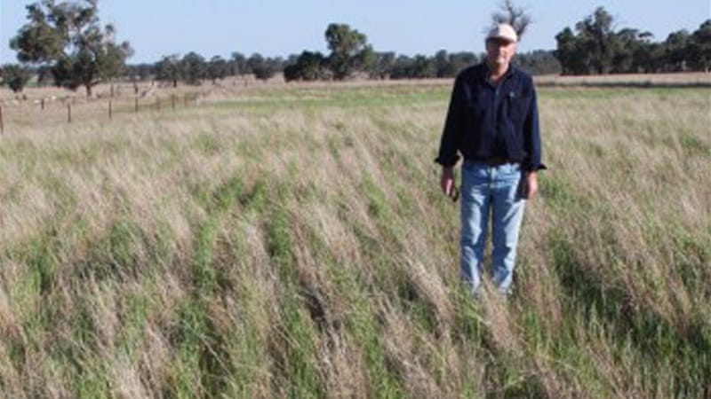 Through innovative farming methods, Colin Seis of New South Wales, Australia, is able to raise cereal crops and sheep on the same land - a two-for-one deal [Winona Farms/Solutions Journal]