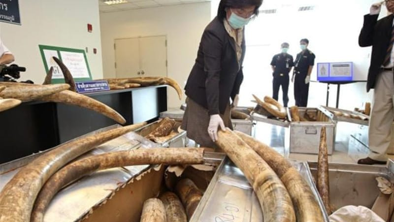 """Years of monitoring by TRAFFIC, and information from Thailand's own self-reporting to the CITES Secretariat, indicate clearly that the country's ivory markets are supplied from illegally imported African stock,"" says author [EPA]"