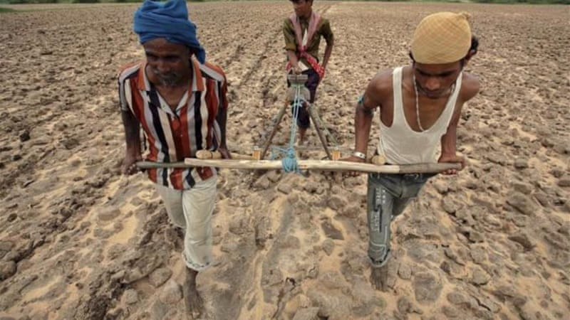 Soaring seed prices in India have resulted in many farmers being mired in debt and turning to suicide [Reuters]
