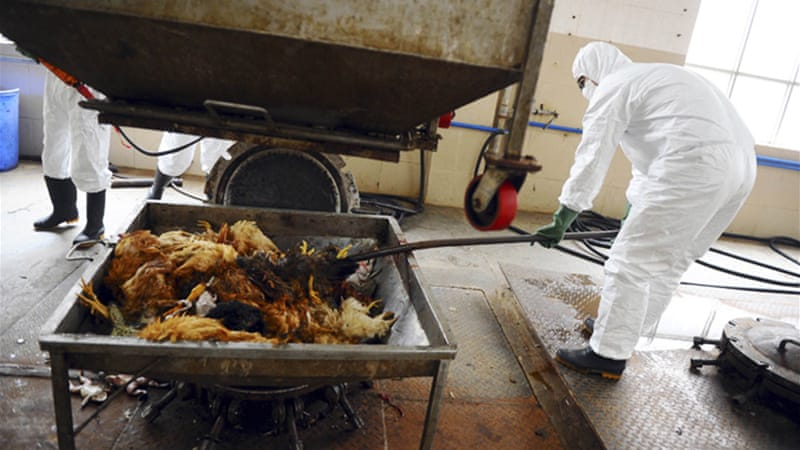 Team of experts said what was mystifying about the latest virus is the absence of visible illness in poultry [Reuters]