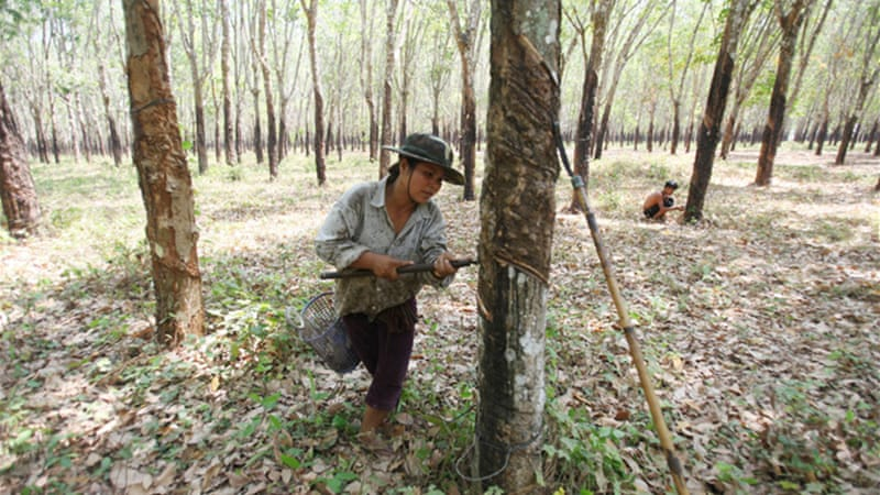 More than 1.2 million hectares of land in Cambodia alone have been leased for rubber plantations [EPA]