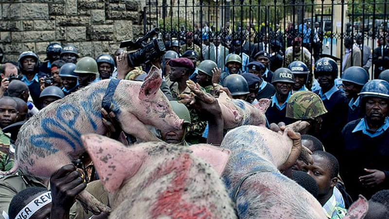 Kenyan protesters carried pigs to symbolise MPs' greed after voting to increase their own salaries [AFP]