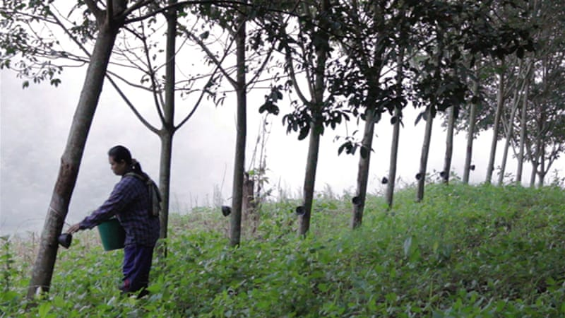 Drug addiction grows on Thai rubber farms | | Al Jazeera