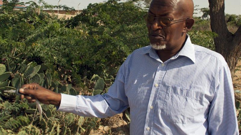 Investigating genocide in Somaliland