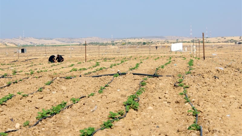 Israeli restrictions on farming in Gaza border areas have affected 113,000 Palestinians [Lena Odgaard/Al Jazeera]