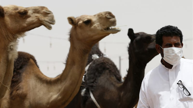 Saudi Arabia has urged people who come in contact with camels to wear masks and gloves [Reuters]