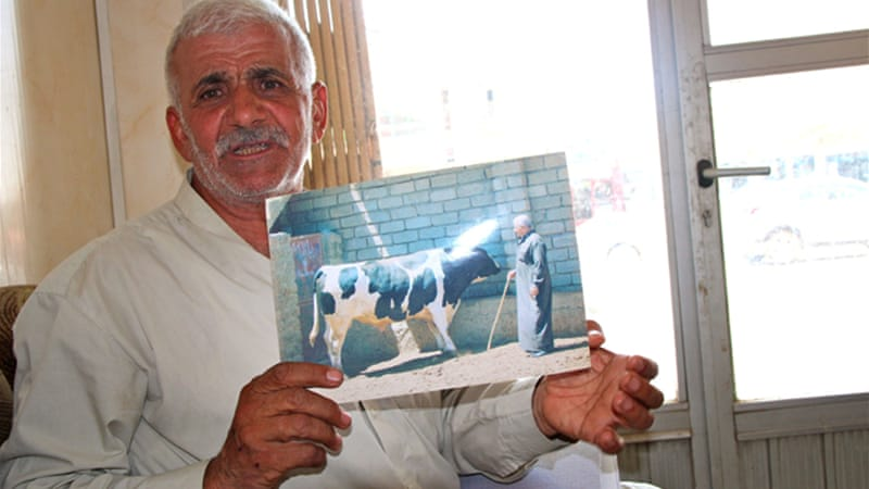 Iraqi farmer Tawfiq Abbosh Jubbo Sakat says Islamic State fighters stole all his cows [Sophie Cousins/Al Jazeera]