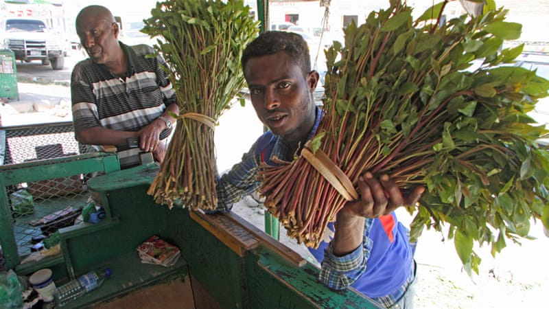 Somaliland abuzz from Ethiopia's khat convoys | Health | Al