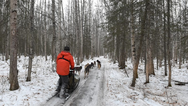 In practice for this year's Iditarod Trail Sled Dog Race [Getty]