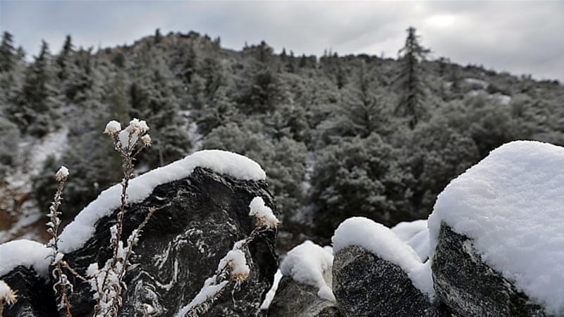 Snow covers the ground in Forest Falls, California, on Friday [The Inland Valley Daily Bulletin/AP]