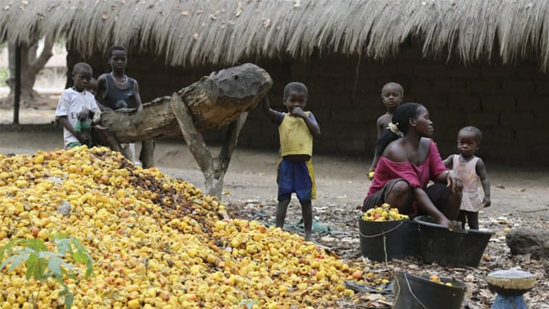 A woman sorts through a cashew harvest [Reuters]